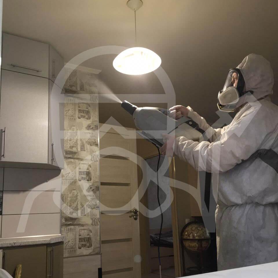 Борьба с муравьями на кухне